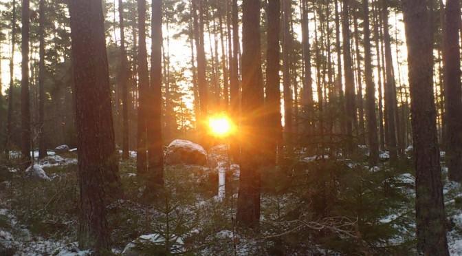 Det är bra med uppförsbacke i skogen då får man en egen soluppgång :)