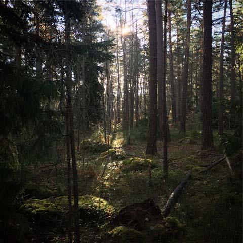 HjärtaSkogen