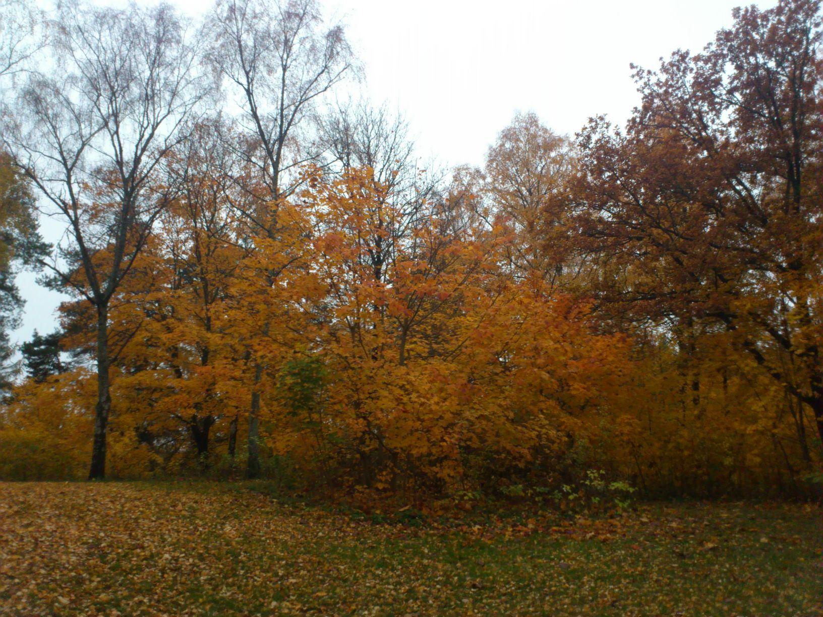 Skytteparken lyser som en sol i Eskilstuna