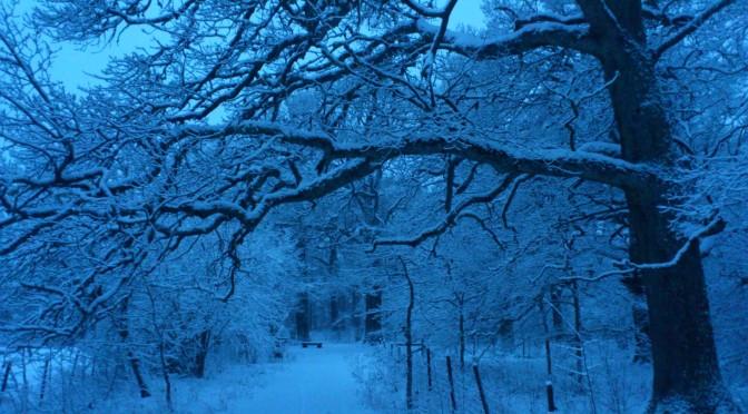 19/12-11 Kronskogen i Eskilstuna, +-0 klockan 08.18.